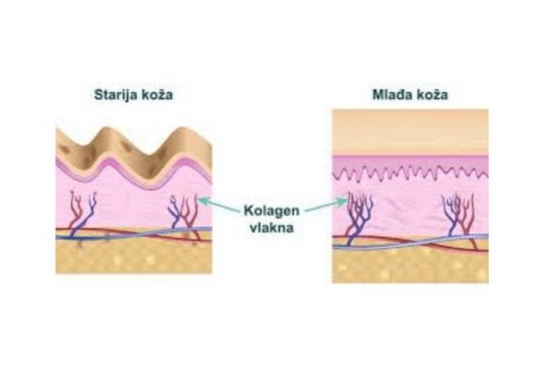 kolagen vlakna